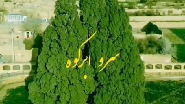 معرفی مسنترین موجود زنده ایران / فیلم