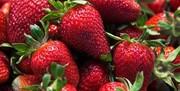 توت فرنگی، میوهای سرشار از ویتامین با خواص فراوان