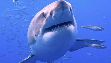 حقایقی جالب درباره دندان کوسهها که با شنیدن آن شگفتزده میشوید