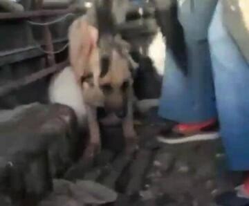 ماجرای ویدئوی جنجالی درباره سگکشی توسط شهرداری تبریز چه بود؟