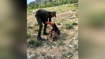 نجات توله خرس قهوهای در رود ارس / فیلم