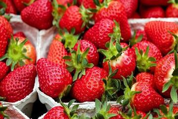 خواص شگفتانگیز توتفرنگی / مصرف توتفرنگی برای کدام افراد توصیه نمیشود؟