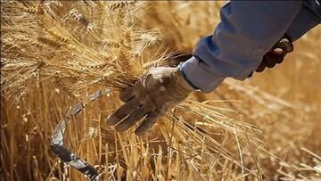 انتقاد شدید از افزایش قیمت نان / باید مشخص شود که چرا قیمت آرد ثابت اما قیمت نان بالا رفته است