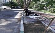 جزییات خودسوزی هولناک در میدان نارمک تهران / عکس