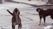 مرگ زن سالخورده به دلیل حمله وحشتناک سگ های ولگرد