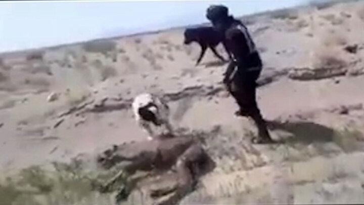 آزار وحشیانه بچه شتر توسط ۴ مرد در خراسان جنوبی / فیلم