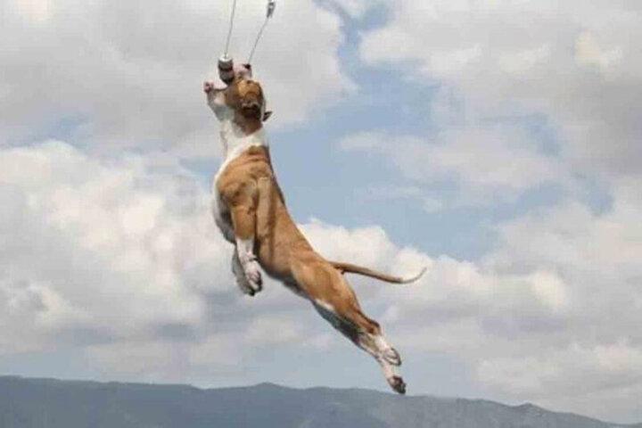 پرواز عجیب یک سگ باهوش در آسمان! / فیلم