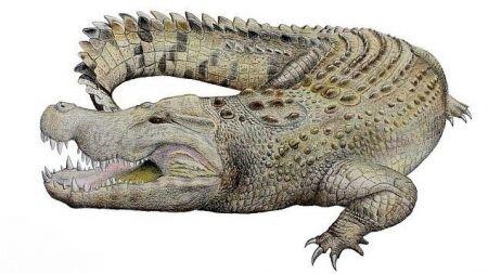 کشف جمجمه یک تمساح 8 میلیون ساله! (+عکس)