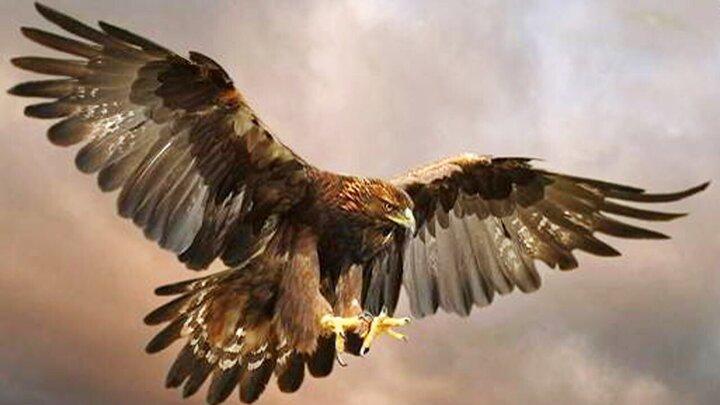 لحظه صید شدن مارماهی توسط عقاب / فیلم