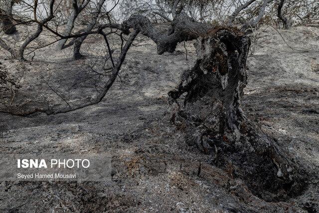 سوختن ۲۰۰ اصله درخت از جنگلهای پارک ملی کرخه