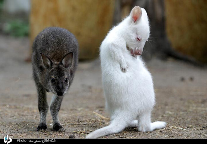 تصاویری جالب از حیوانات زال در حیات وحش جهان