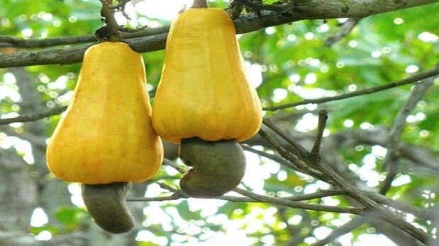 میوههایی مفیدی که میتوانند باعث مسمومیت شوند
