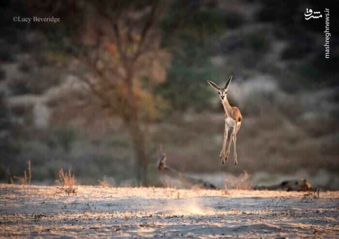 تصاویر بامزه و خنده دار از دنیای حیوانات