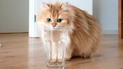 ویدیو تماشایی و جالب از آب بازی حیوانات خانگی