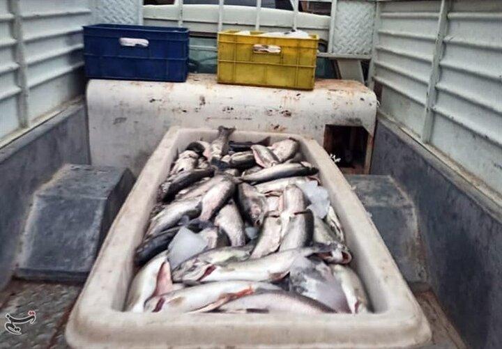 ماجرای تلف شدن بیش از ۲ تن ماهی در سنندج