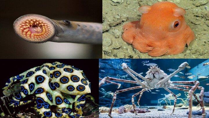 عجیبتترین و زشتترین حیوانات کره زمین / تصاویر