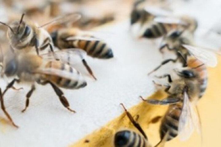 تلاش عجیب دو زنبور برای باز کردن در بطری نوشابه / فیلم
