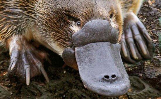 حیوانهای چندش آور و عجیب کره زمین + تصاویر