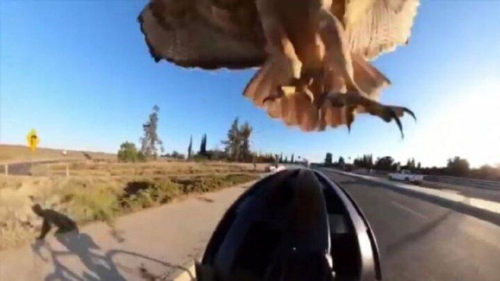 صحنه حمله عقاب به مرد دوچرخه سوار / فیلم