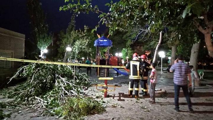 سقوط درخت در تربت حیدریه روی یک خانواده / عکس
