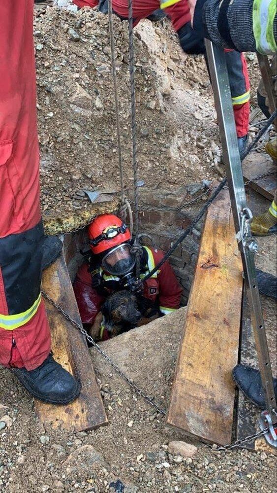 نجات توله سگ از چاه
