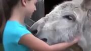 خوشحالی عجیب الاغ با دیدن دختربچهای که این حیوان را پرورش داده بود / فیلم