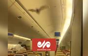 ترس مسافران از ورود خفاش به داخل کابین هواپیما / فیلم