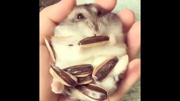 ویدیو تماشایی از لحظه تخمهخوردن خرگوش / فیلم