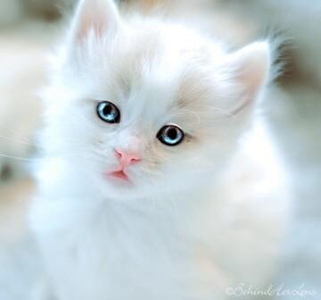 انعطافپذیری عجیب بدن گربه بازیگوش / فیلم