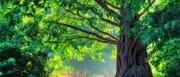 درختان هم ضربان قلب دارند!