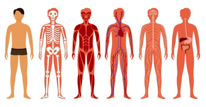 ۱۰ حقیقت جالب درباره بدن انسان!