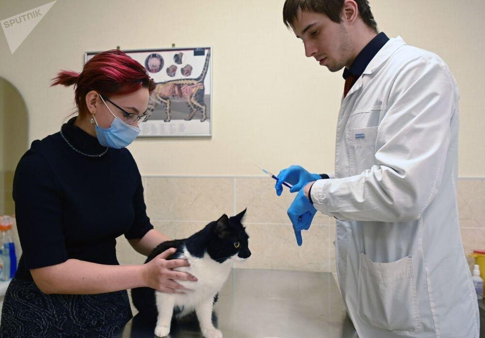 حیوانات خانگی در روسیه واکسن کرونا زدند / تصاویر