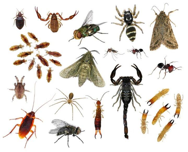 سم کدام حشرات خطرناک است؟ / اقدامات لازم