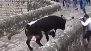 بازداشت گاو آزار گیلانی که دم گاوها را میبرید