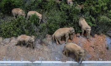 هجوم گله فیلها به شهر! / فیلم