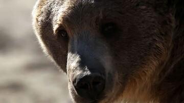 خرس قهوهای مرد اقلیدی را تکهپاره کرد