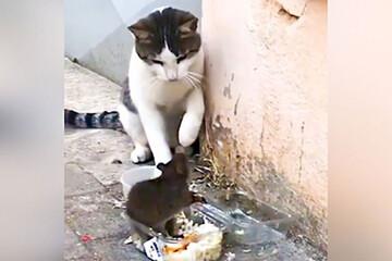 حمله عجیب موش گرسنه به گربه بانمک / فیلم
