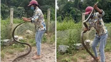 زن ویتنامی با دست خالی مار را شکار کرد / فیلم