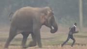 تخریب شدید خودرو، در پی حمله وحشتناک فیل عصبانی / فیلم