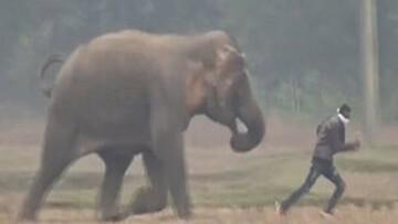 لحظه دلخراش کشته شدن یک مرد توسط فیل عصبانی / فیلم