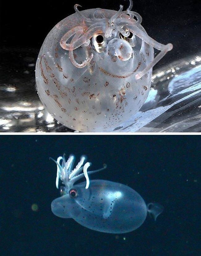 موجوداتی با تواناییهای عجیب و غریب + تصاویر