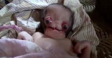 تولد نوزاد عجیب الخلقه و ترسناک در هند | نوزاد بدون گوش و شبیه موجودات فضایی / عکس