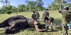تست کرونا از فیل ها در هند / فیلم