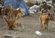 سگهای بدون صاحب و دور باطل تصمیمهای غلط / شرایط پذیرش سرپرستی سگهای عقیم شده