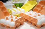 قیمت هر شانه تخم مرغ به  ۳۱ هزار تومان رسید