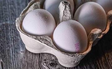 قیمت تخم مرغ ارزان میشود