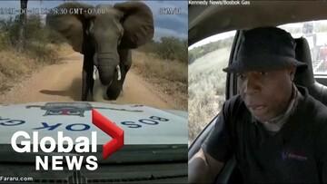 عصبانیت فیل از ورود خودرو به قلمرویش / فیلم