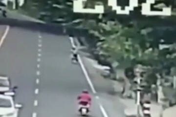 لحظه مرگ دلخراش موتورسوار در اثر سقوط درخت تنومند / فیلم