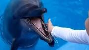 حمله وحشتناک دلفین گرسنه به یک کودک / فیلم