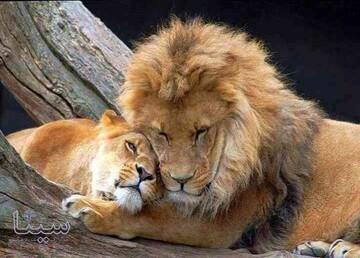 چرا حیوانات یکدیگر را بغل میکنند؟
